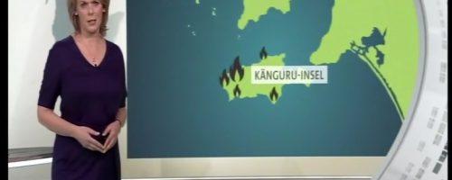 Känguru-Insel-Koala-6min