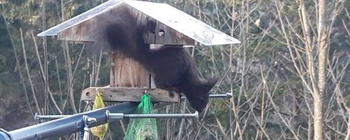 Gast im Vogelhaus-Danke schön und auf Wiederseh´n- 1min